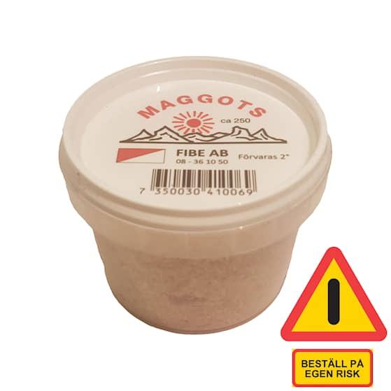 Fibe Maggots röd/vit ca 250 st